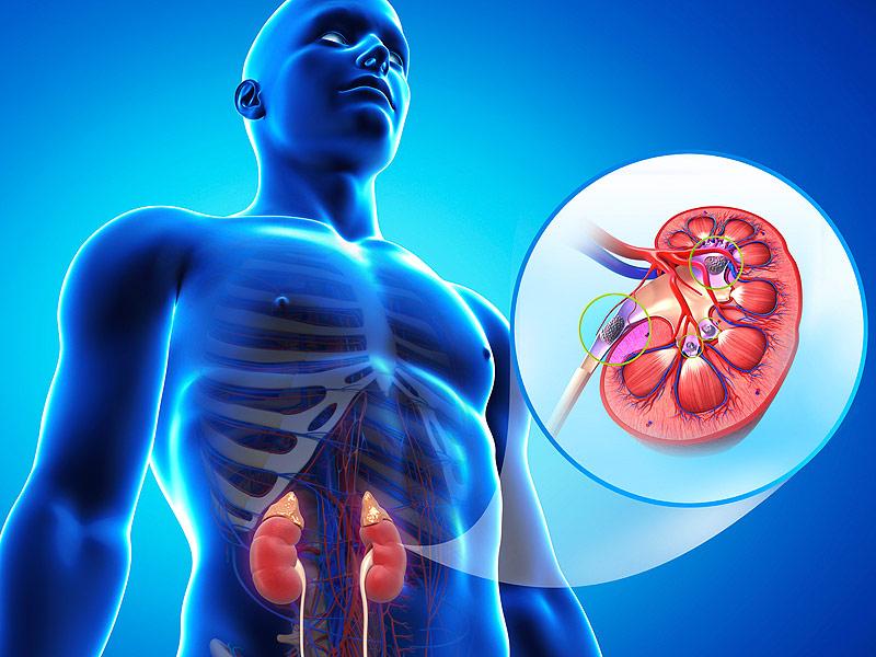 Gezond leven kan nierschade voorkomen