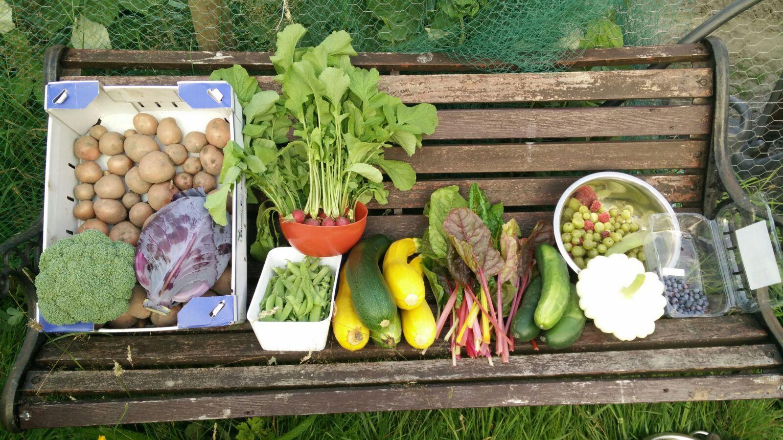Nieuwe serie over tuinieren: Het moestuinvirus, heb jij het al te pakken?