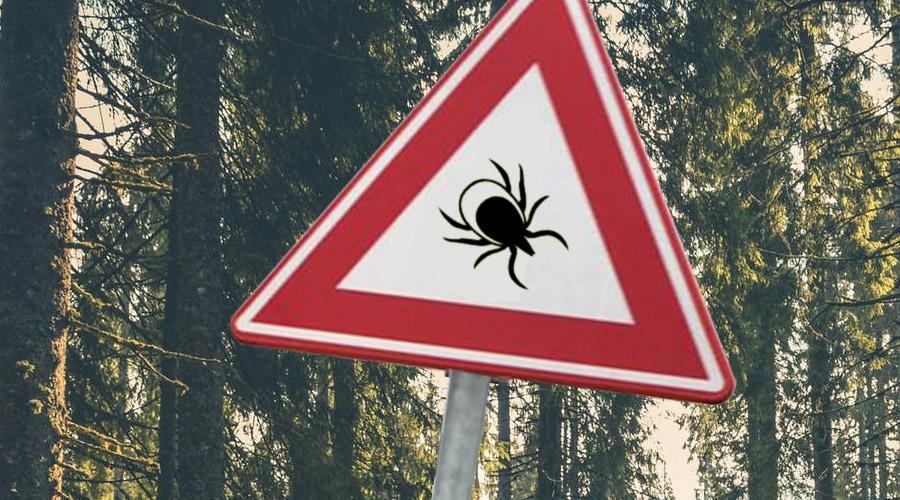 Een schrijnend verhaal over leven met Lyme
