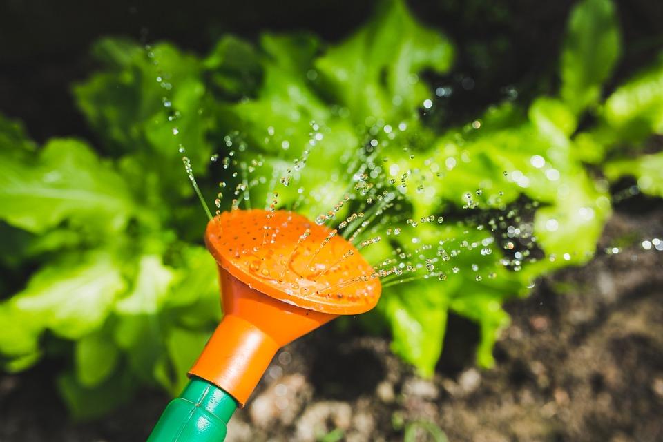 5 tips tegen droogte in de moestuin