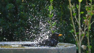 merel neemt bad