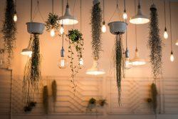 planten aan het plafond