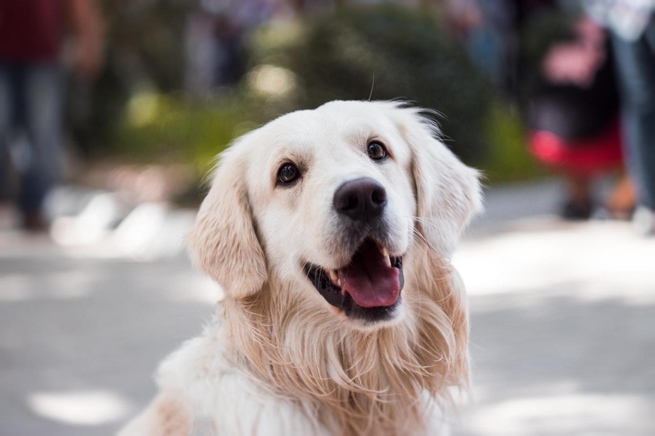 De beste hondenbrokken van Nederland  – Gezond en wel!