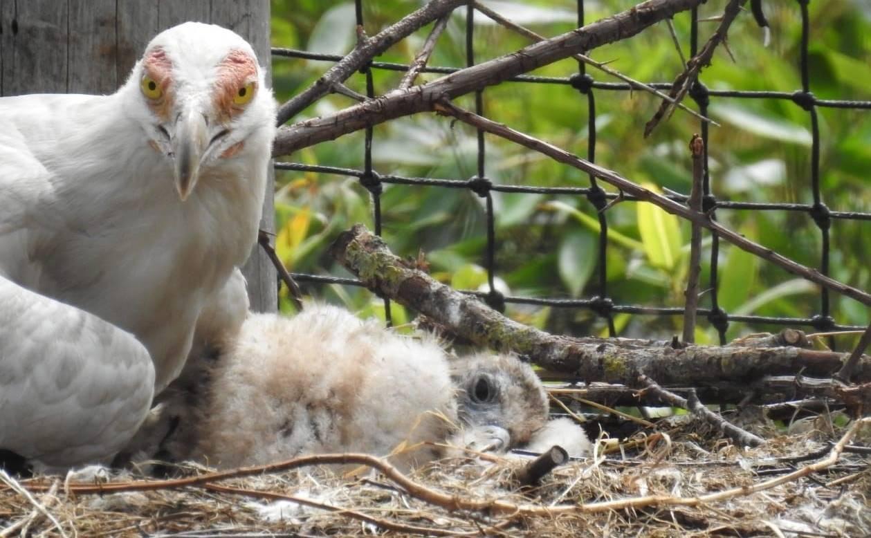 Bijzondere geboorte: palmgiertje uit het ei gekropen in dierentuin Overloon
