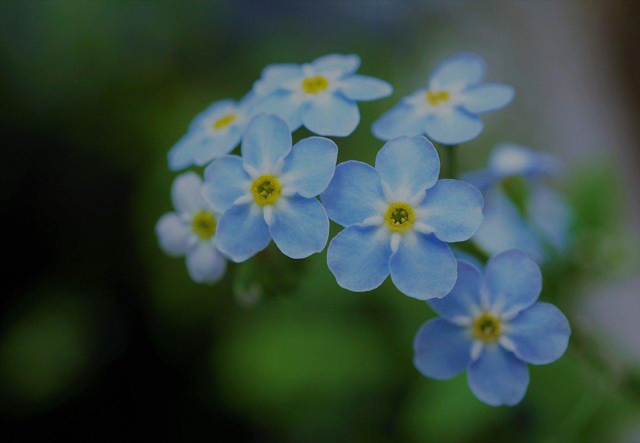 Meer aandacht voor dementie door het Vergeet-mij-niet pad