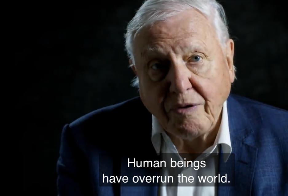 Sir David Attenborough (94) is een hit op Instagram